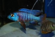 HUGE Selection of Cheap Tropical Fish